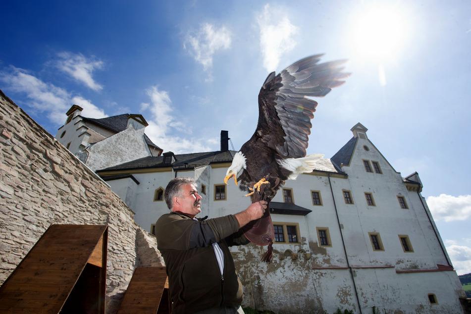 Auf Burg Wolkenstein könnt Ihr Greifvögel hautnah erleben.