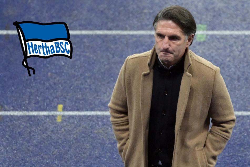 Hertha BSC: Siegen oder Fliegen! Endspiel für Bruno Labbadia?