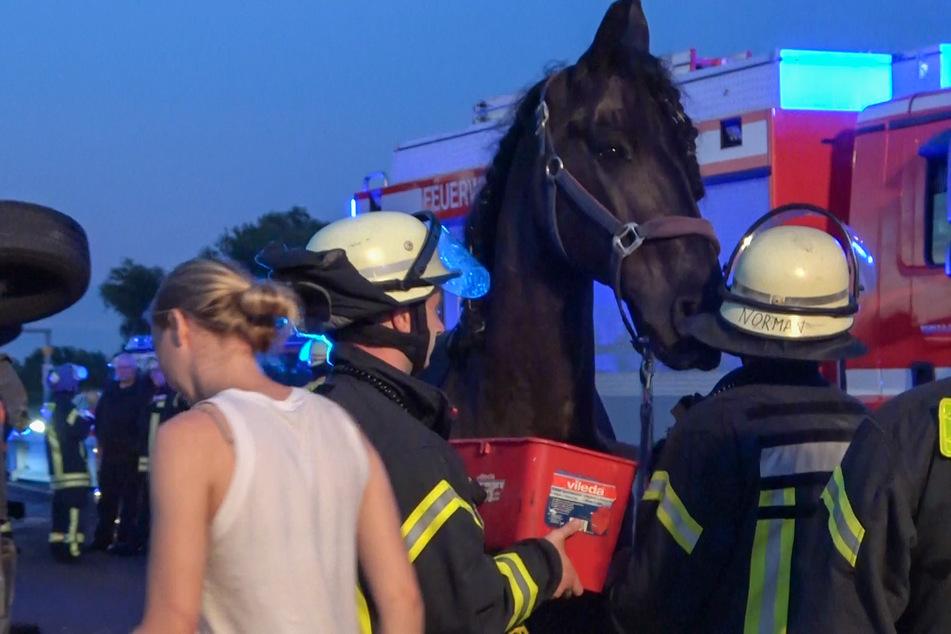 Transporter überschlägt sich auf A2: Eingeklemmtes Pferd von Feuerwehr befreit