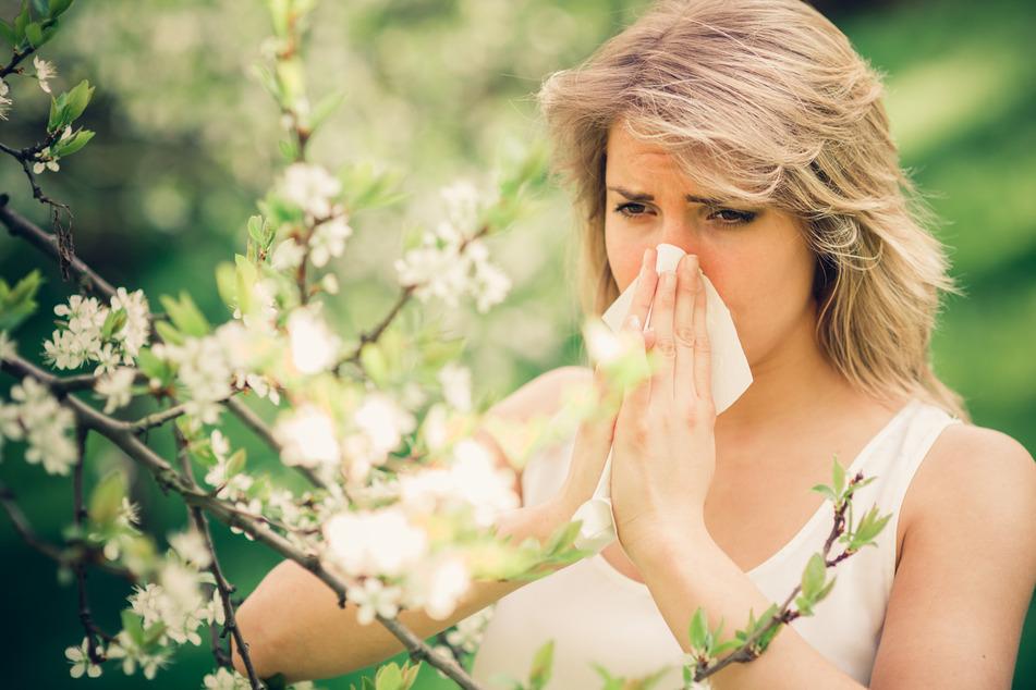 Corona-Ansteckung durch Pollenflug? Studie verunsichert Patienten