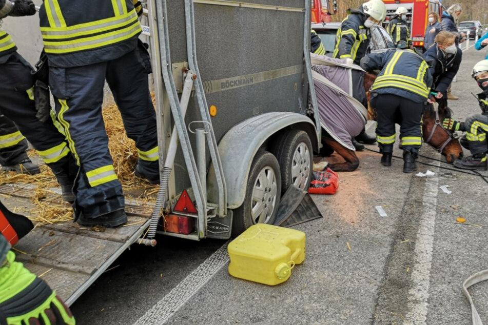 Dramatische Rettungsaktion: Feuerwehrleute helfen gestürztem Pferd