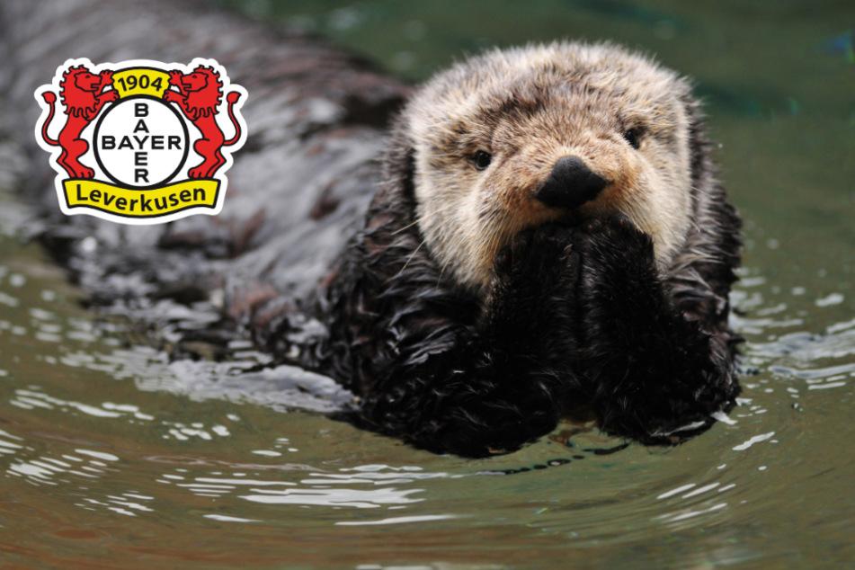 Leverkusen-Fans überreichen Spende an süße Otter-Dame