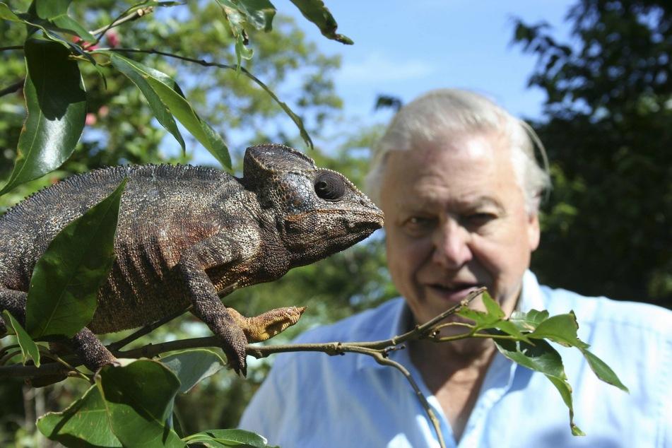Sir David Attenborough gives royal children a special gift at Kensington Palace