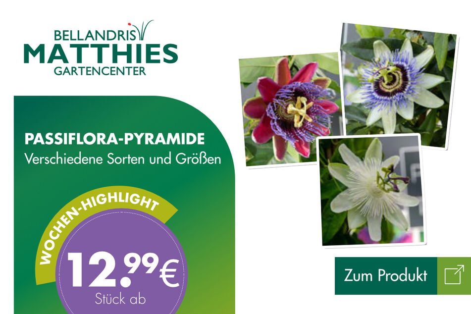Passiflora-Pyramide für 12,99 Euro