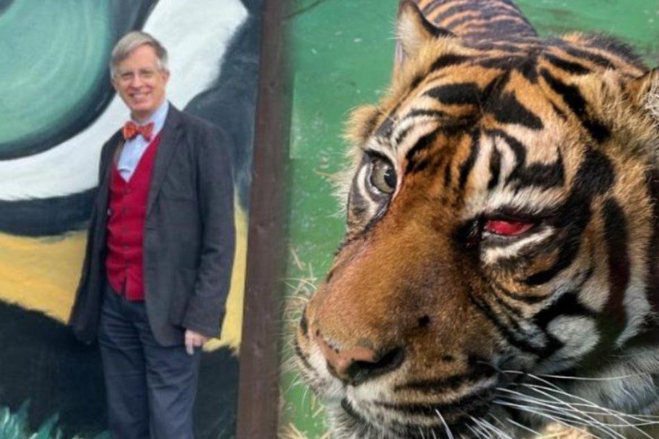 Tiger leidet an schlimmer Augenkrankheit, doch dem Tierarzt gelingt Sensation