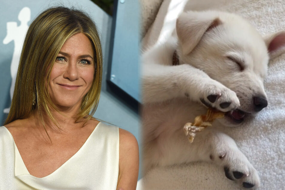 Jennifer Aniston's new aristocratic puppy is getting the royal treatment