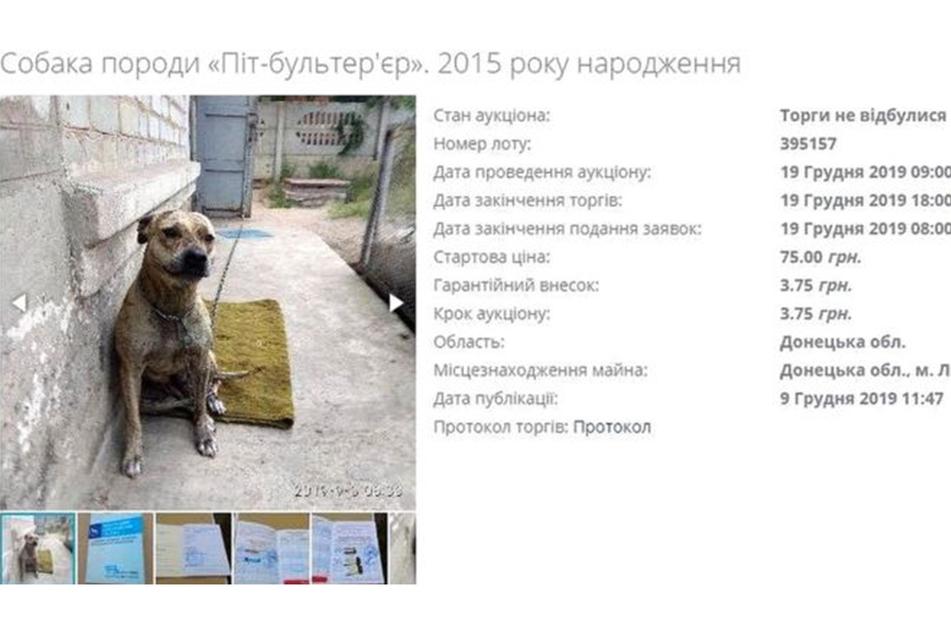 Dieser Hund wurde für 75 ukrainische Griwna angeboten. Umgerechnet sind das gerade einmal etwas mehr als 2,50 Euro.