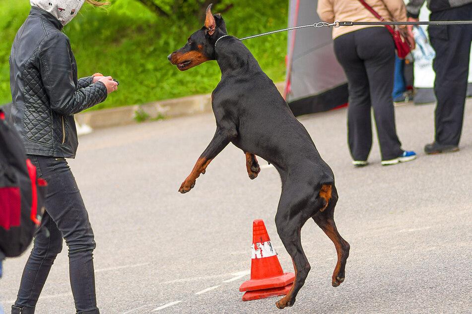 Hund anspringen abgewöhnen: Das sind die Tricks