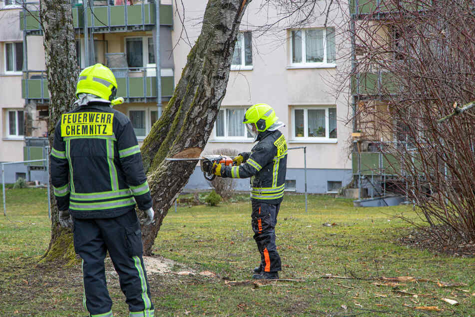 Die Chemnitzer Feuerwehr musste in Siegmar eine Birke beseitigen.