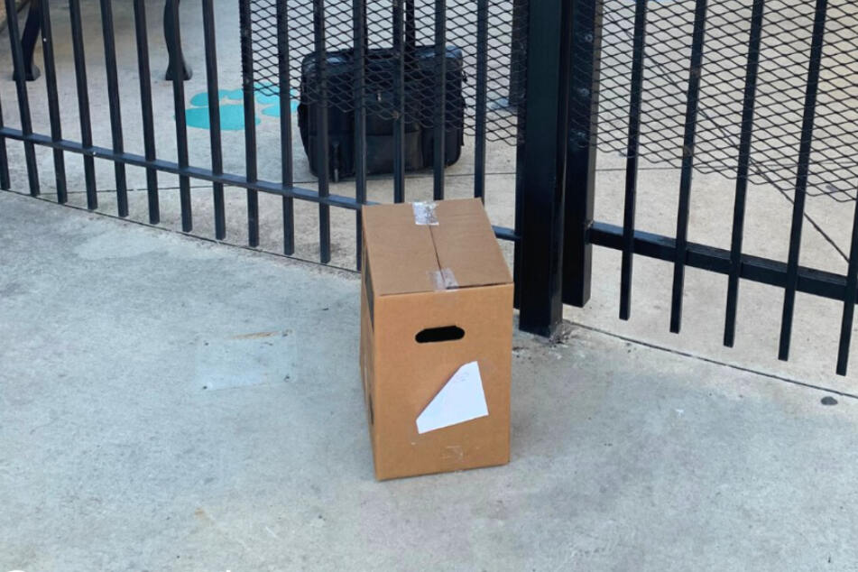 This cardboard box saw the woman immediately.