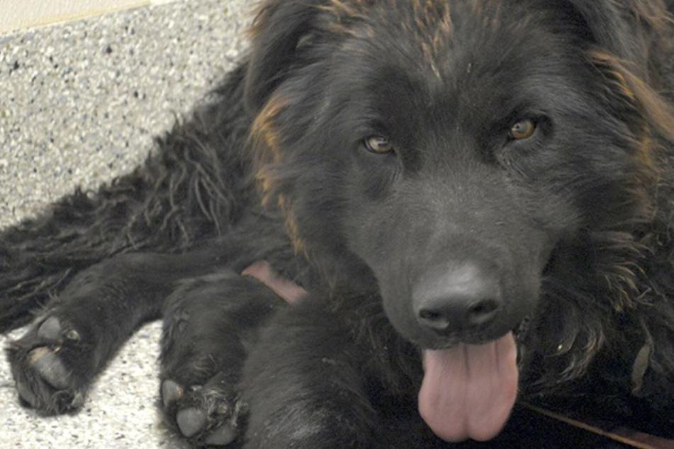 Hund irrt verletzt umher: Dann machen seine Retter eine schockierende Entdeckung