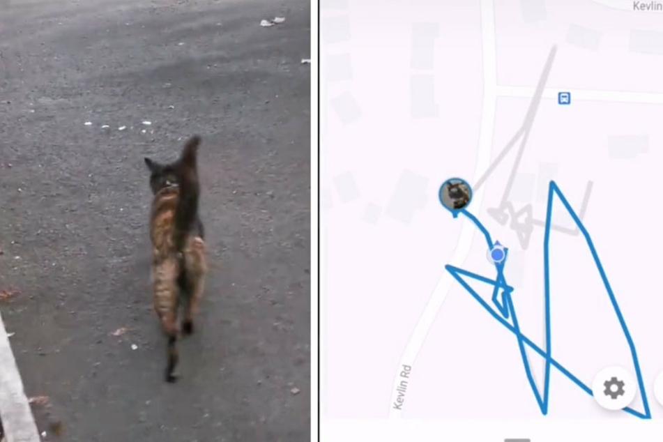Ihre andere Katze Cookie blieb derweil ihrem Haus treu. Sie entfernte sich nie weit von ihrer Unterkunft.