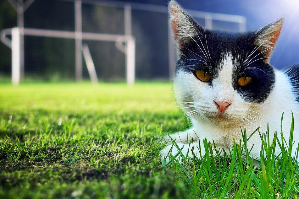 Katze wird als Fußball benutzt, bis sie stirbt