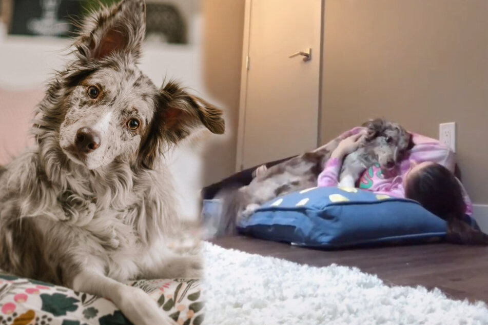 TikTok users are all choked up about this dog's reaction to her owner coming for a sleepover
