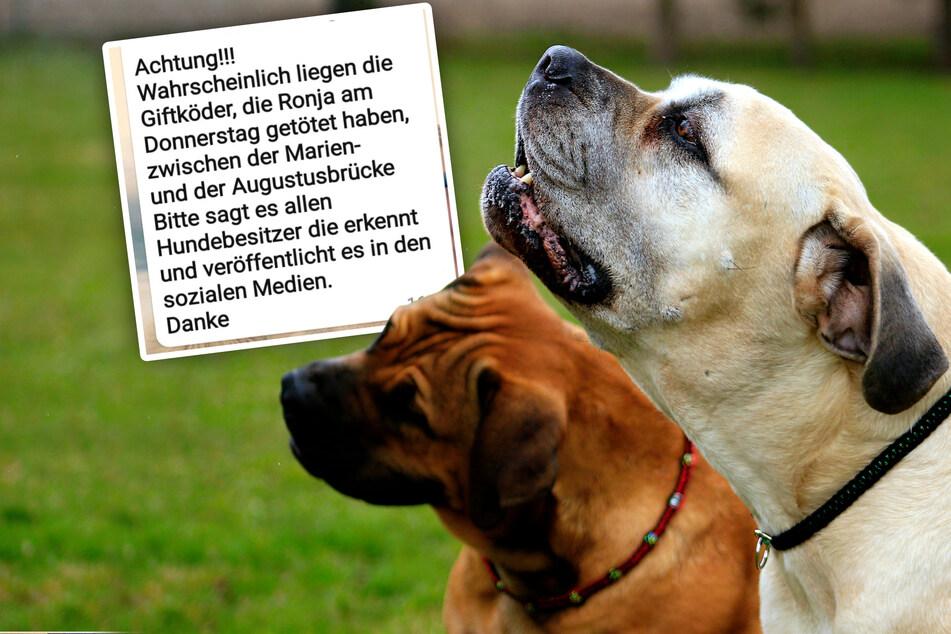 Dresden: Hundebesitzer aufgepasst: Giftköder-Warnung im Dresdner Zentrum!