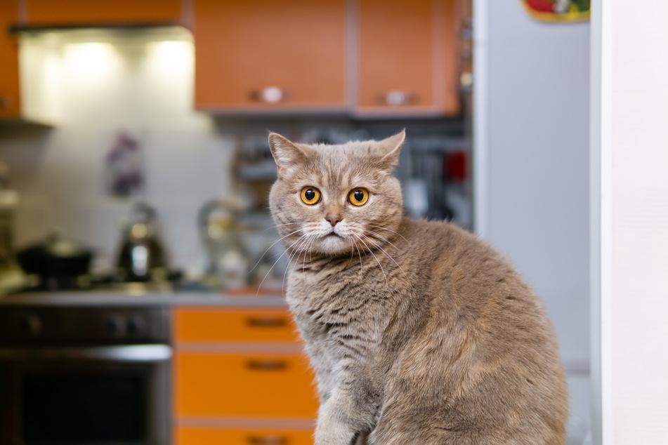 Hat eine Katze in Halle etwa eine Wohnung in Brand gesetzt?