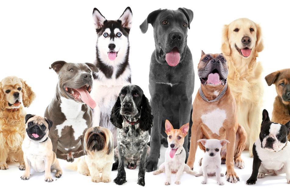 Welcher Hund passt zu mir? 8 Punkte, die Du vor dem Kauf beachten solltest