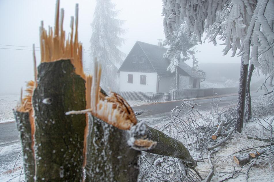 Umgekrachte Bäume sorgten am Sonntag für mehrere Feuerwehreinsätze im Osterzgebirge.