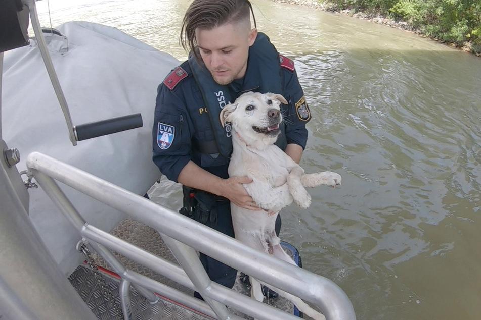 Der in der Donau treibende Mischling wurde von der Wasserpolizei gerettet.