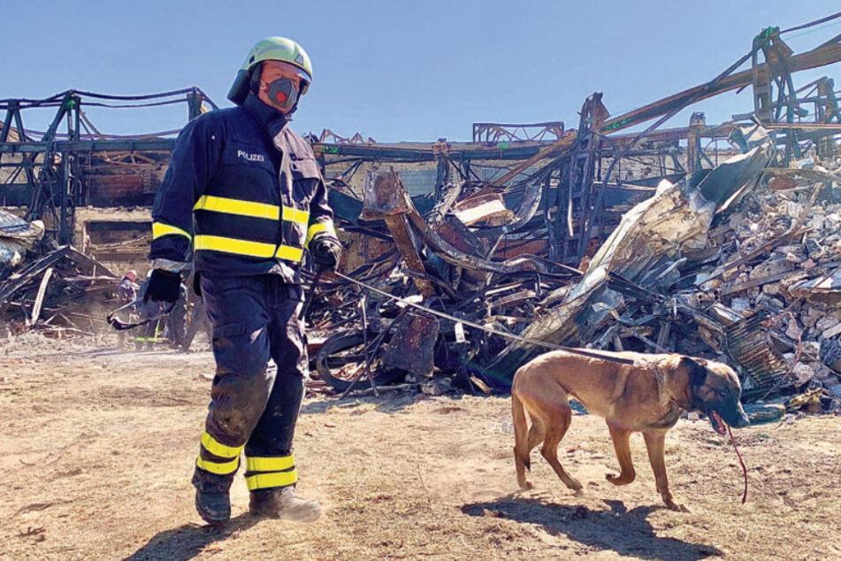 Dresden: Brandursachen-Schnüffler auf Spurensuche in Heidenau