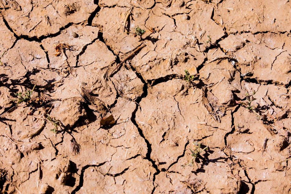 Trockenes NRW: Kaum Regen, aber viel Sonne im April