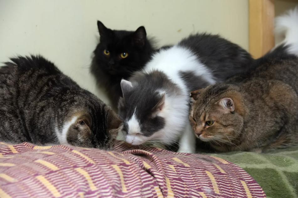 Polizei befreit mehr als 66 Katzen aus Wohnung