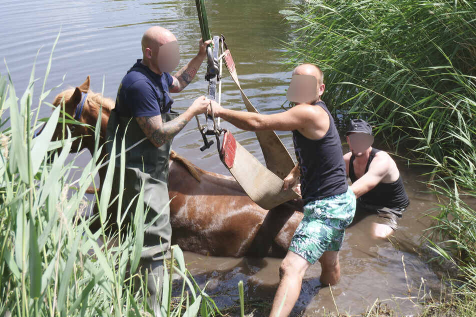 20 Kameraden der Feuerwehr waren im Einsatz, um das Tier aus dem Wasser zu bergen.