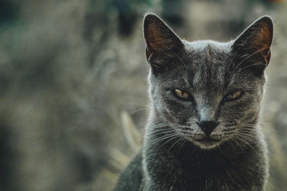 Deine Katze ist aggressiv? Das könnten die Gründe sein!