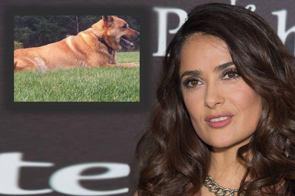 Salma Hayeks Hund auf ihrem Grundstück erschossen