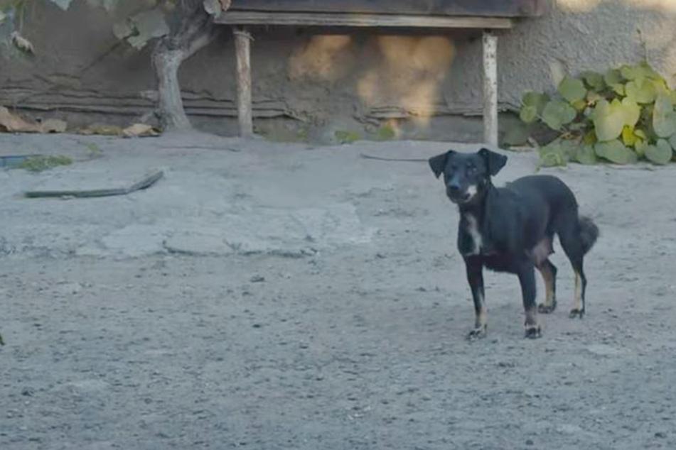 Frau ruft Tierschützer wegen mehrerer Hunde um Hilfe: Vor Ort sehen sie Trauriges