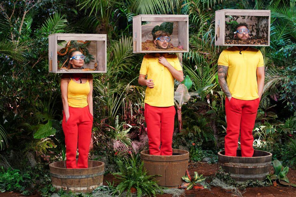 Christina, Oliver und Sam bekommen fiese Tierchen in die Kistenchen geschüttet: Wissensfragen stehen an - wie gemein doch RTL ist!
